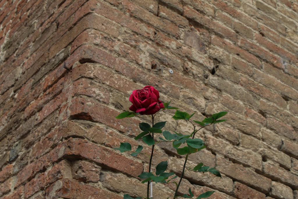 certaldo-flower3